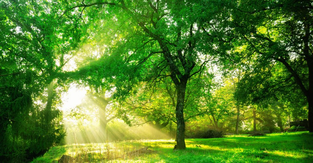 Green forest background with morning sunrise in spring season.